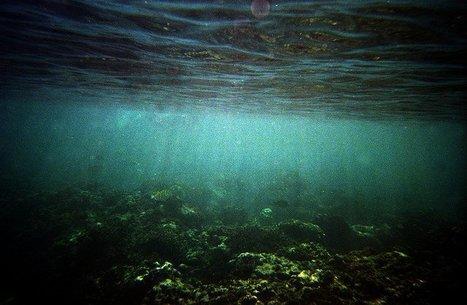 ¿Cuántas especies habitan la Tierra? | Recull diari | Scoop.it