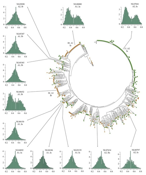 bioRxiv: Successful asexual lineages of the Irish potato Famine pathogen are triploid (2015) | Plant Pathogenomics | Scoop.it
