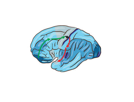 IBM Research Thinks It's Solved Why The Brain Uses So Much Energy | The Science of Learning (and Teaching) | Scoop.it