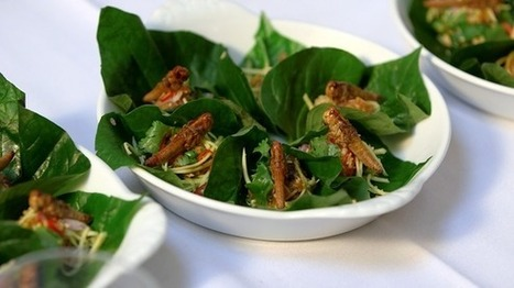 Tonight: The Food We Eat - Future Foods | Entomophagy: Edible Insects and the Future of Food | Scoop.it