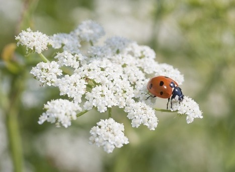 Jardin facile : oublier les pesticides | jardins et développement durable | Scoop.it