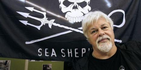 Interpol demande l'arrestation de l'écologiste Paul Watson, enfui d'Allemagne | Dans mes bulles... | Scoop.it