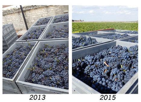Millésime 2015 : que faut-il en attendre ? - All About Burgundy. Informations, dégustations, guide sur les vins de Bourgogne. | Wine and the City - www.wineandthecity.fr | Scoop.it