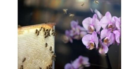 La diminution des insectes pollinisateurs menace les cultures mondiales | Veille Scientifique Agroalimentaire - Agronomie | Scoop.it