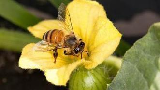 Honey bee numbers get winter bounce - Western Farm Press | Colony Collapse Disorder | Scoop.it
