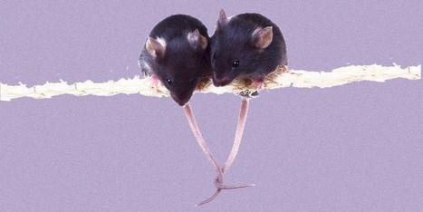 Empathic Rats: Recent research showing rodents' concern for their fellow species suggests empathy   Empathy and Animals   Scoop.it