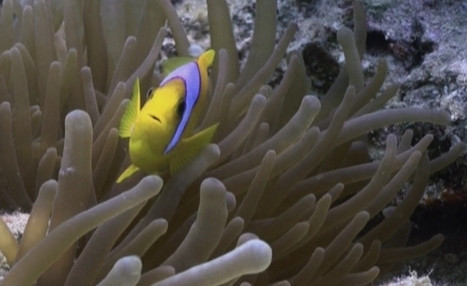 Divers flock back to Egypt's Red Sea resorts | Scuba Diving Adventures | Scoop.it