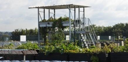 Les chiffres de l'agriculture urbaine et périurbaine | Pour une agriculture et une alimentation respectueuses des hommes et de l'environnement | Scoop.it
