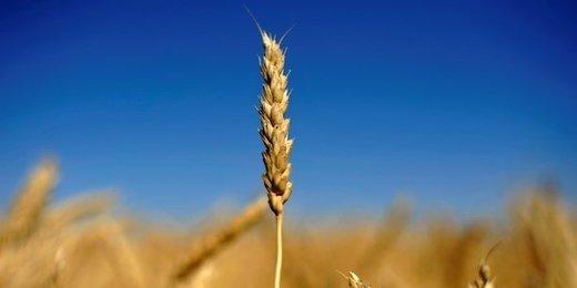 Usine agro du futur : enquête sur les besoins de l'agroalimentaire