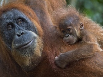 How anthropomorphism can be a tool for animal conservation - Treehugger | Environmental Education & Wildlife Conservation | Scoop.it