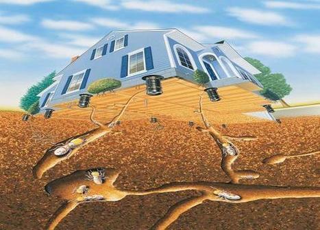 Các cách mối xâm nhập vào công trình, nhà cửa ~ Blog cuộc sống | Dịch vụ | Scoop.it