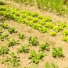 Imprese Agricole, Territorio e Agricoltura