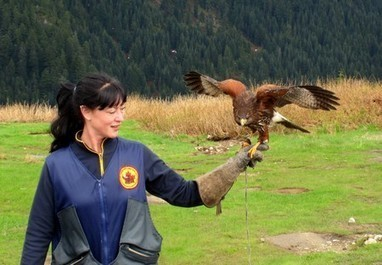 Grouse Mountain, Vancouver, Canada « Dream Big, Live Large! | Conservation of wildlife | Scoop.it