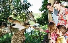 Is the Zoo an Educational Experience for Children | Animals R Us | Scoop.it