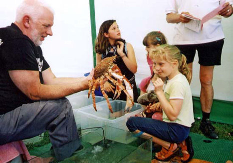#BritishMarineLife   Spiny Spider #Crabs, Maja squinado ~ informative links also...   Rescue our Ocean's & it's species from Man's Pollution!   Scoop.it