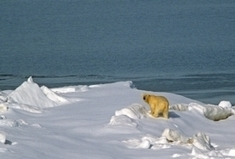 Have We Passed the Point of No Return on Climate Change? | Peer2Politics | Scoop.it