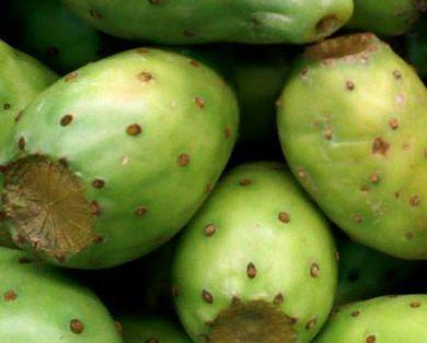 Productores poblanos de tuna exportan a Holanda las primeras 600 cajas de fruta de la temporada | Cocina internacional en la miscelánea | Scoop.it