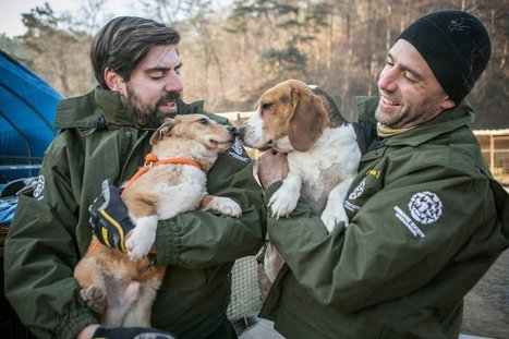 You Will Never Find Dogs Looking Happier Than These 8 Who Were Saved From a Meat Farm | Nature Animals humankind | Scoop.it