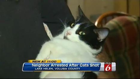 Florida man shot neighbor's cats with pellet gun for pooing in his yard, police say (VIDEO) | The Funniest Cats In The World! | Scoop.it
