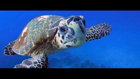 Vidéo Full HD | Voyage plongée de rêve aux Seychelles ! | Plongeurs.TV | Scoop.it