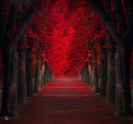 Endless Passion by Ildiko Neer | Reflejos | Scoop.it