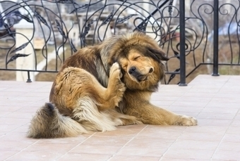 Ways to Stop Excessive Scratching in Dogs | Pets | Scoop.it