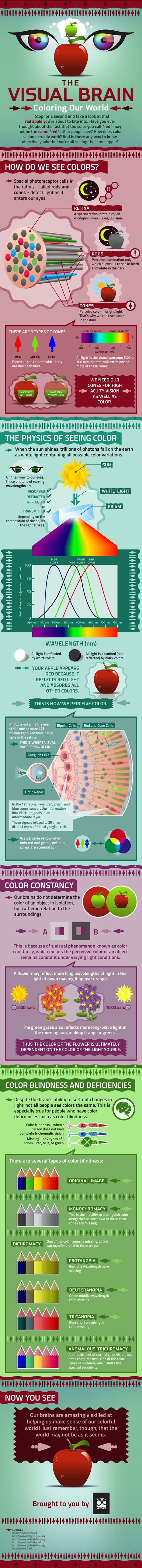 Mezzmer Blog » The Visual Brain- Coloring Our World | Infographics ideas for Education | Scoop.it