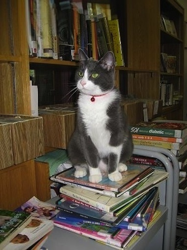 Famous and Fabulous Library Cats | LibraryLinks LiensBiblio | Scoop.it