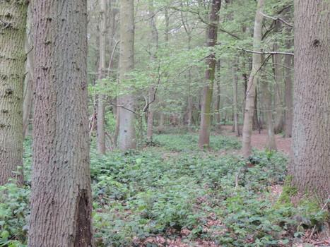 Nature, Environnement, Biodiversité du Nord : C'est ici ! : Arbre et climat | l'écologie en milieu urbain | Scoop.it