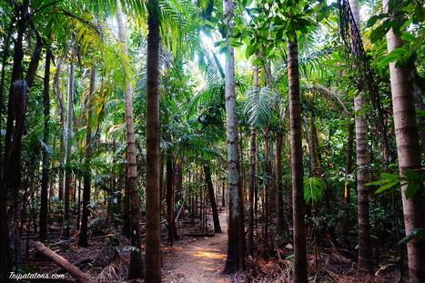 Litchfield National Park ; Australie | The Blog's Revue by OlivierSC | Scoop.it