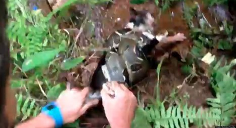 WATCH: Man Wrestles Cat Away From Boa Constrictor | Cats Cat History | Scoop.it
