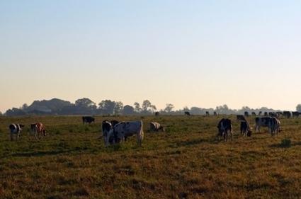 Got milk? Got land? N.C. farms dwindle | UNC Charlotte Urban Institute | North Carolina Agriculture | Scoop.it