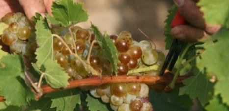 Pourquoi 2015 pourrait-être une grande année pour le vin. | Actualités du monde viticole | Scoop.it
