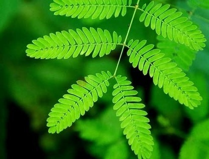 Les plantes les plus insolites et incroyables de notre monde | L'actu de l'etourisme ! | Scoop.it