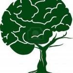 Neurociencias y educación | Conocimiento libre y abierto- Humano Digital | Scoop.it