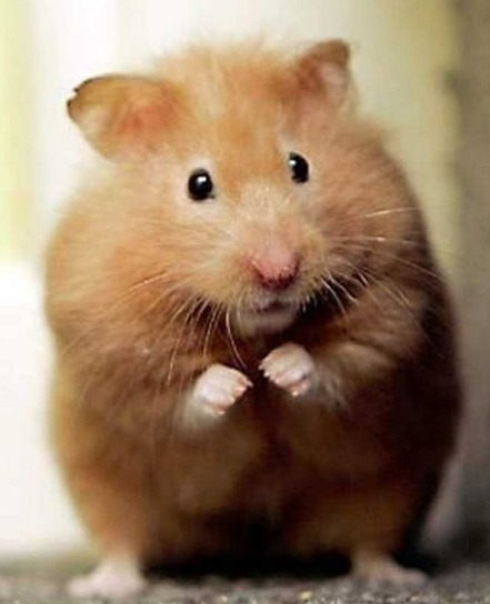 The Alzheimer's Hamster Within YOU | Alzheimer's Reading Room | Scoop.it