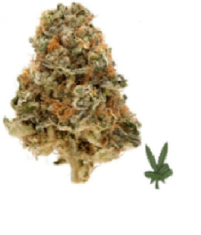 Blueberry Strain' in marijuanawholesuppliers | Scoop it