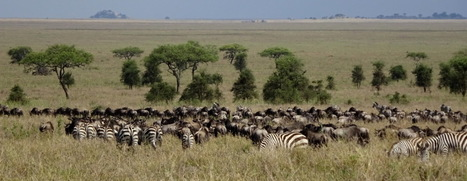 Why we didn't visit more National Parks and Game Reserves in Tanzania | Wildlife Conservation: People and Stories | Scoop.it