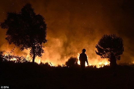 Major Forest Fire in Portugal's Madeira Islands Burns Homes | Lisbon Lifestyle | Scoop.it
