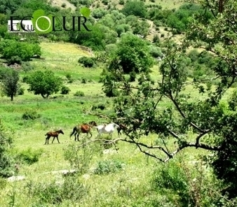 Candidate Programs for Khosrov Reserve Director Position   Saving the Wild: Nature Conservation in the Caucasus   Scoop.it