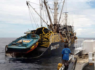 Overfishing of western Pacific bigeye tuna continues   OUR OCEANS NEED US   Scoop.it