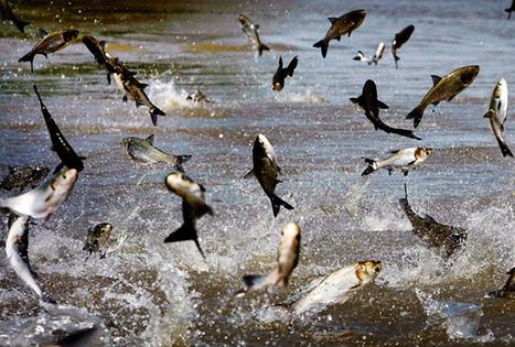 Today's Special: An Invasive Species   Scholastic News Online   Scholastic.com   Education Reformation   Scoop.it