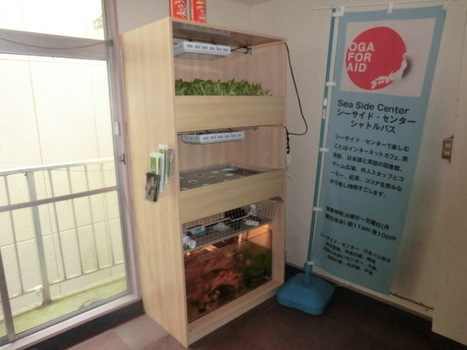 Growing Solutions in Tohoku with Japan Aquaponics   Aquaponics in Action   Scoop.it