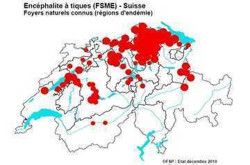 Suisse. Les cas d'encéphalites à tiques ont doublé cette année | EntomoNews | Scoop.it