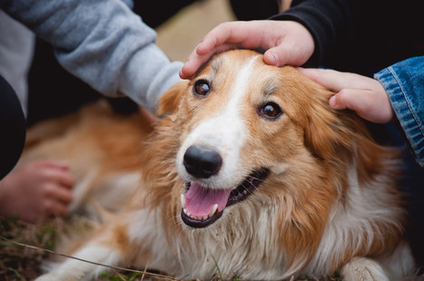 Dog Training Approaches to Rebuilding Trust | Pets | Scoop.it