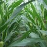 Locavore, santé alimentaire : se protéger des substances chimiques nuisibles à notre santé