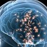 el cerebro:Introducción a la neurociencia