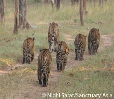 Panthera   Cats Rule the World   Scoop.it