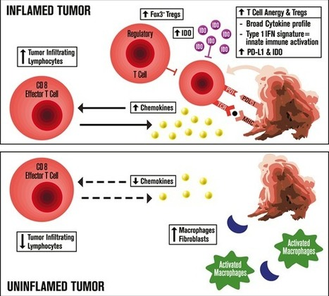 Biomarkers for Immunotherapy: Current Developments and Challenges | 2016 Educational Book | Meeting Library | Melanoma BRAF Inhibitors Review | Scoop.it