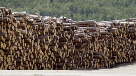 Campbell Group' in Timberland Investment | Scoop it